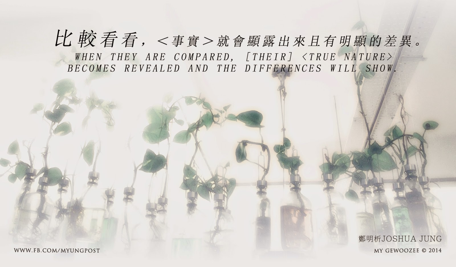 鄭明析,攝理教會,月明洞,植物,比較,事實,Joshua Jung, Providence, Wolmyeung Dong, plant, comapre, true