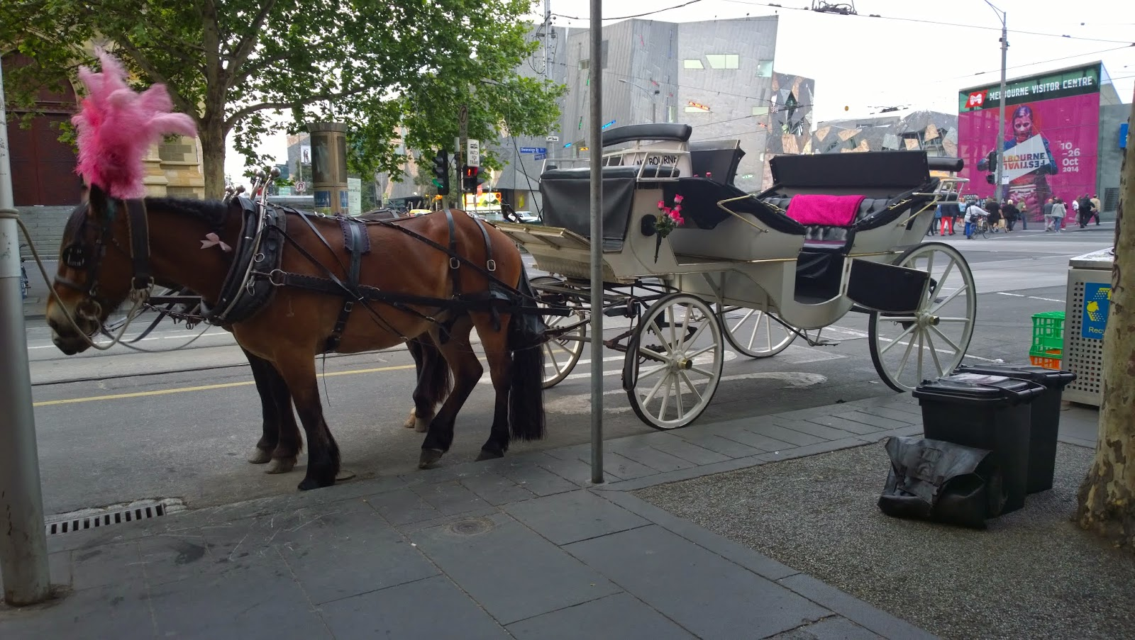 melbourne horse and carriage rides
