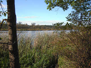 View of Cootes Paradise looking through wooded scenery out into the marsh.