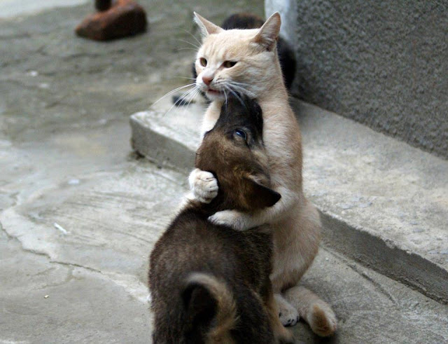 Love hug from a cat to a dog image