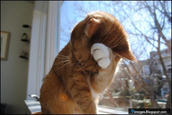 Sad balloon cat