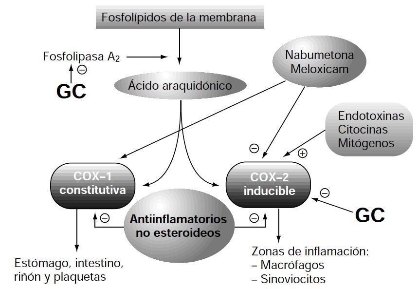 analgesicos esteroideos clasificacion pdf