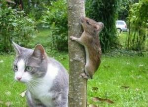 TOM AND JERRY, IS THAT YOU?