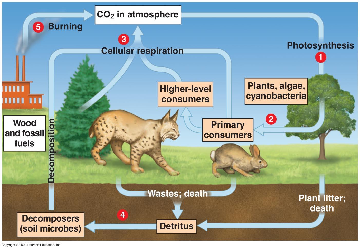 Nd S Blog Komponen Ekosistem Biologi