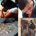 Casal de irmãos de Bacabal é preso suspeito de praticar furtos contra idosos no Bradesco de Codó