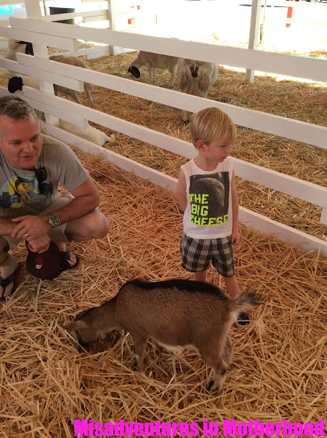 pumpkin patch with petting zoo