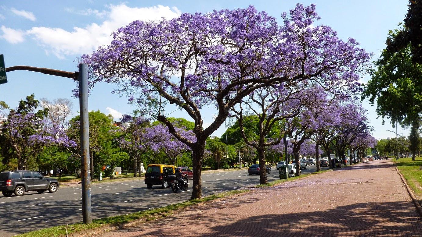 весна в Аргентине