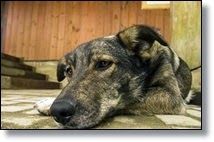 Picture of dog