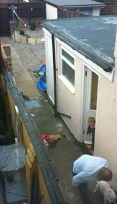 maltrato perro bull terrier