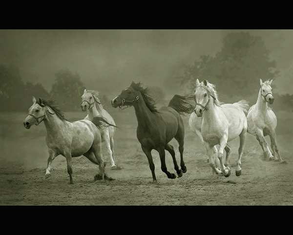 Horses Photography
