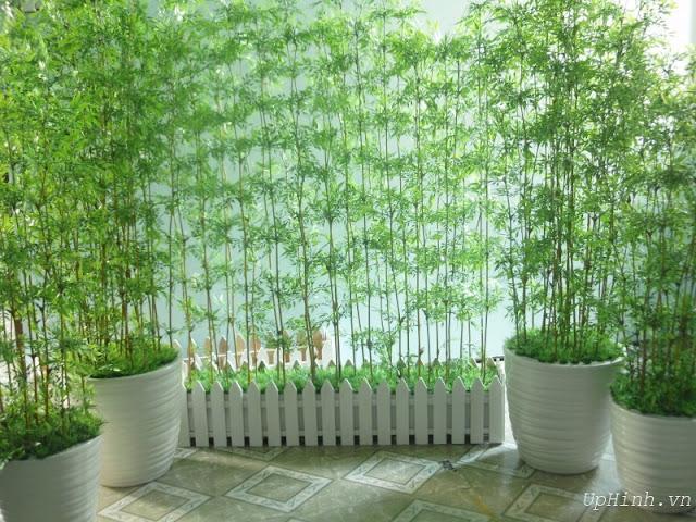 Các loại cây trồng trong nhà theo phong thủy - cây trúc quân tử