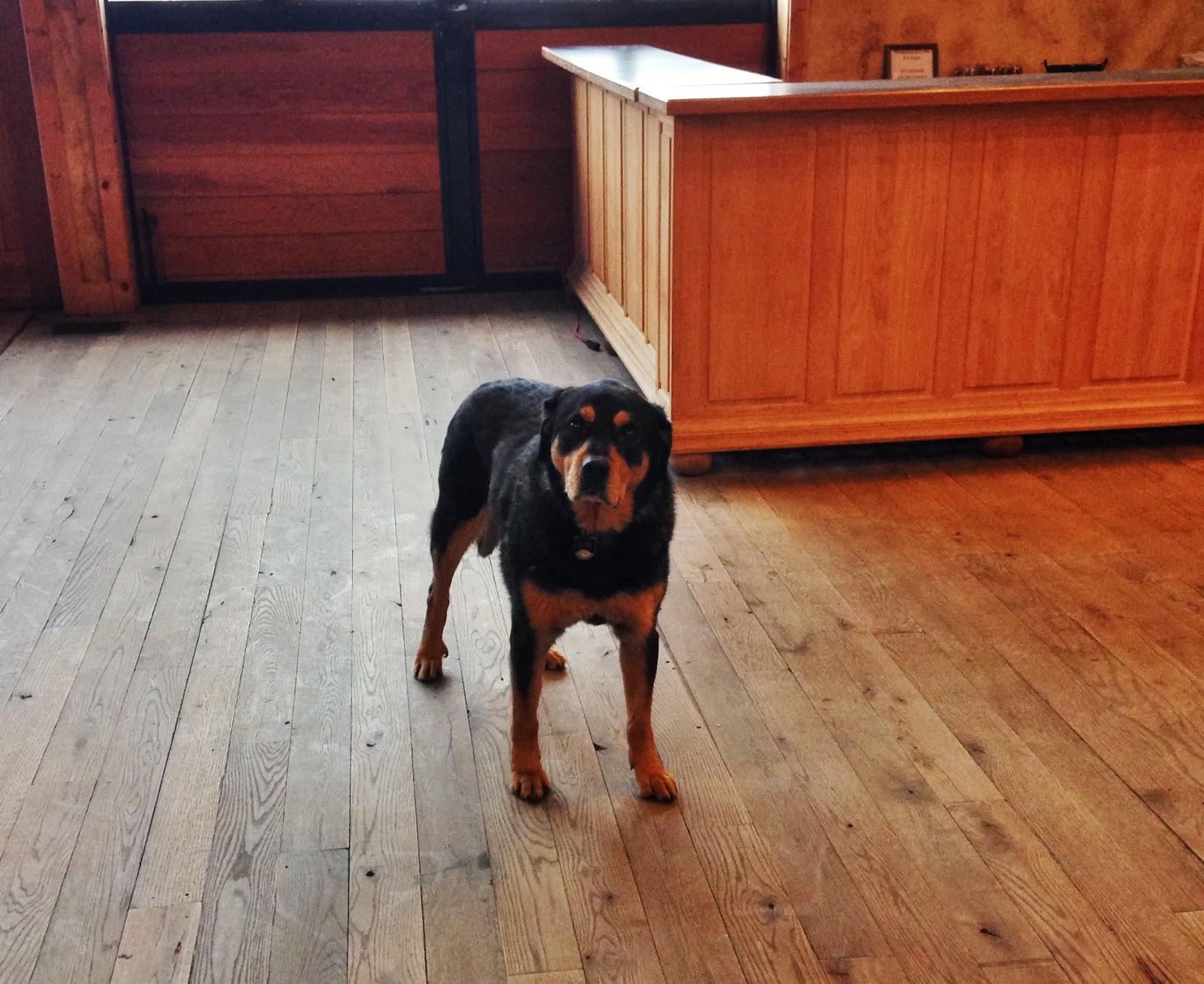dog at barrel oak