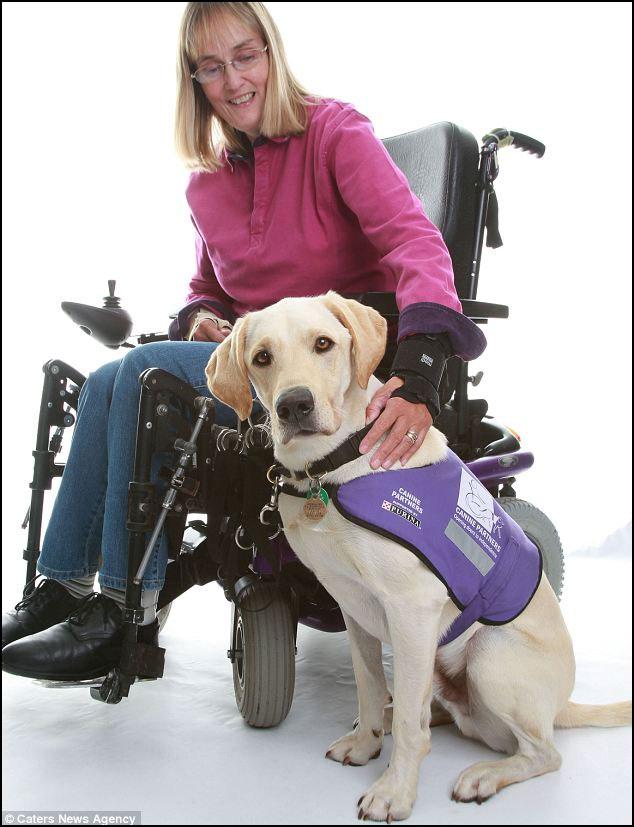 Labrador Byron ajuda dona em cadeira de rodas nas tarefas do seu dia a dia
