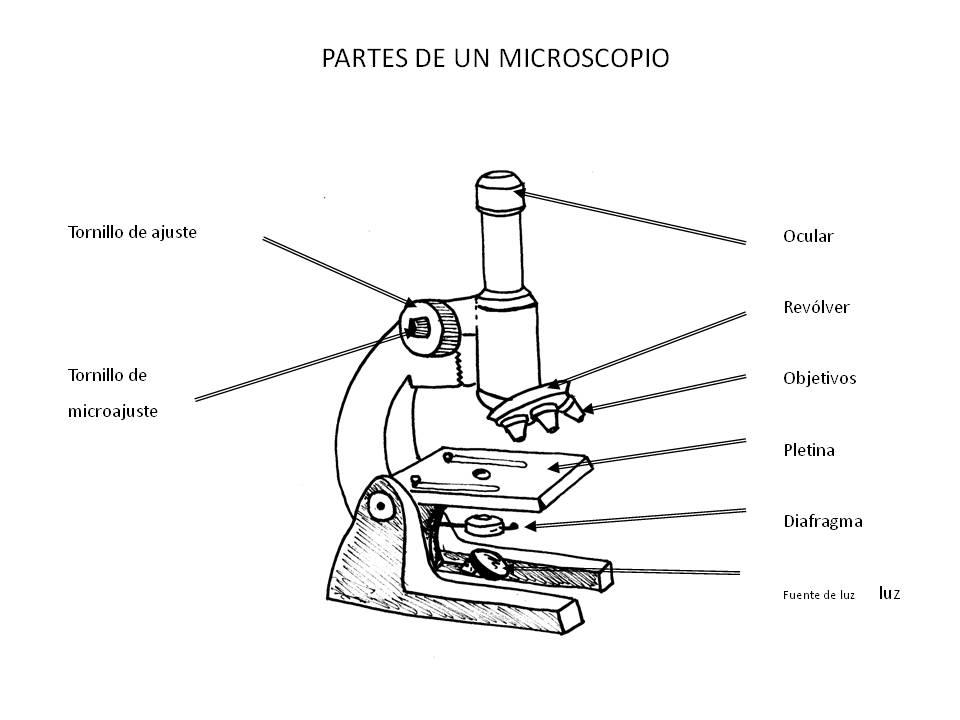 http://4.bp.blogspot.com/-DIQDtPzFttU/UbRqtKS0tLI/AAAAAAAAALE/iqmdFJ6BIaU/s1600/microscopio.jpg
