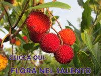 Flora nel Salento e anche altrove