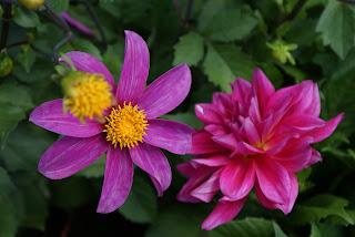 immagine: fiori