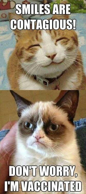 Yo si fuera gato