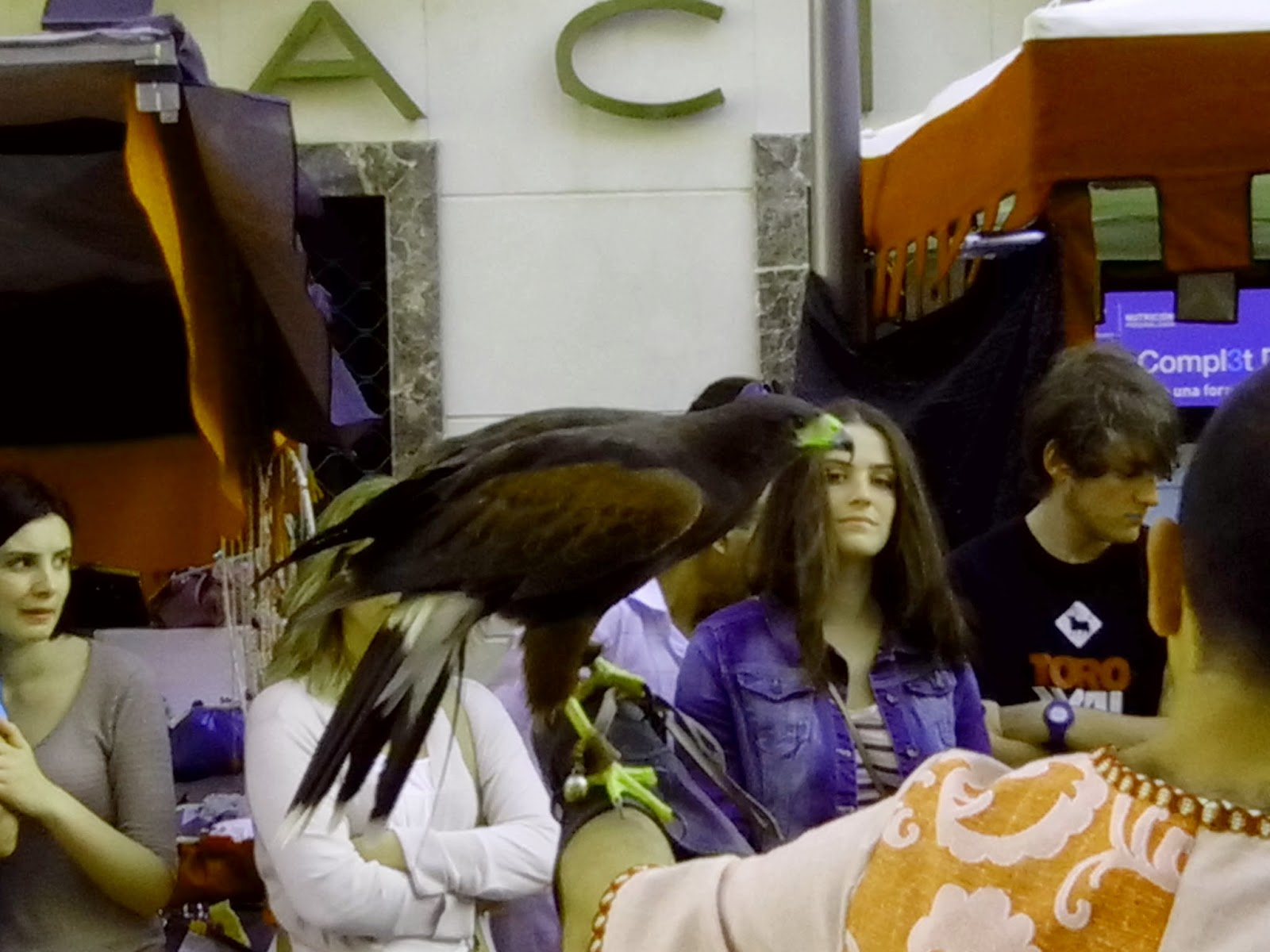 Aguila Harris