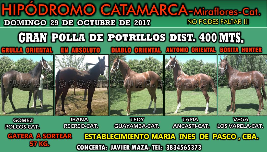 29-10-17-HIP. CAT.POLLA