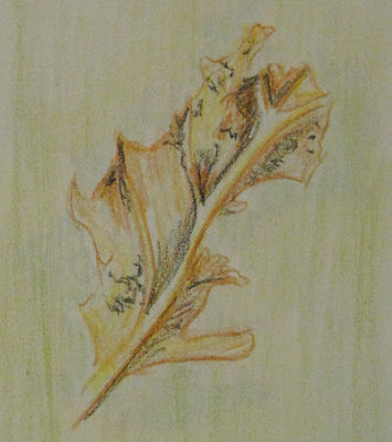 crayon drawing of a dead leaf