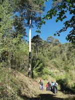 La Pinassa monumental de la Costa del Racó