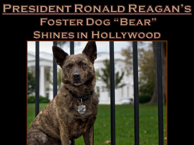 Ronald Reagan Support Puppy Mills and Animal Cruelty - Why Do City of Newport Beach Council Members