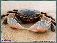 gambar kepiting