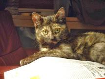 Brugola, la gatta Pantesca