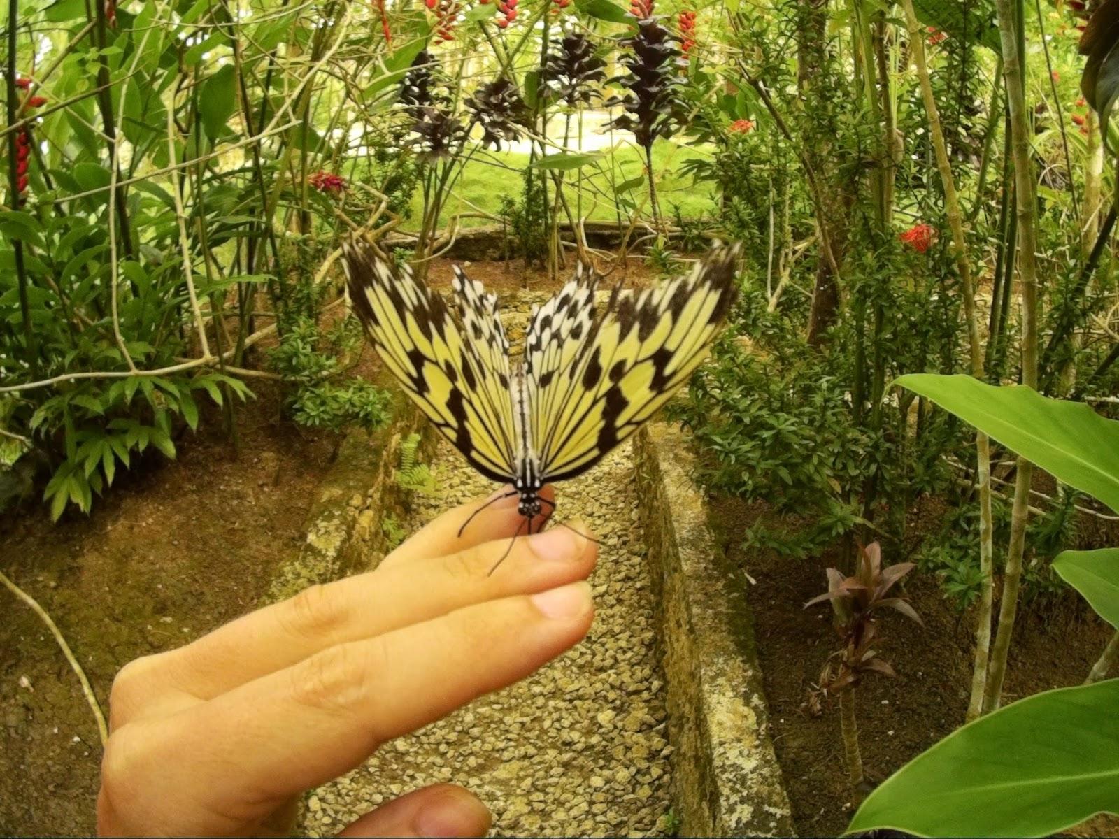 Maleński ogród botaniczny i jego mieszkańcy - motyle