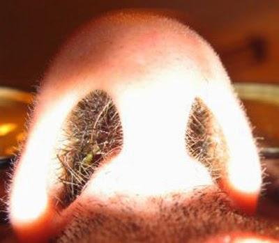 Mengapa Bulu Hidung Bisa Gatal?