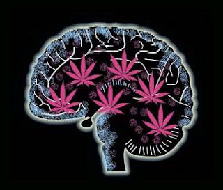 marihuana cannabis cerebro