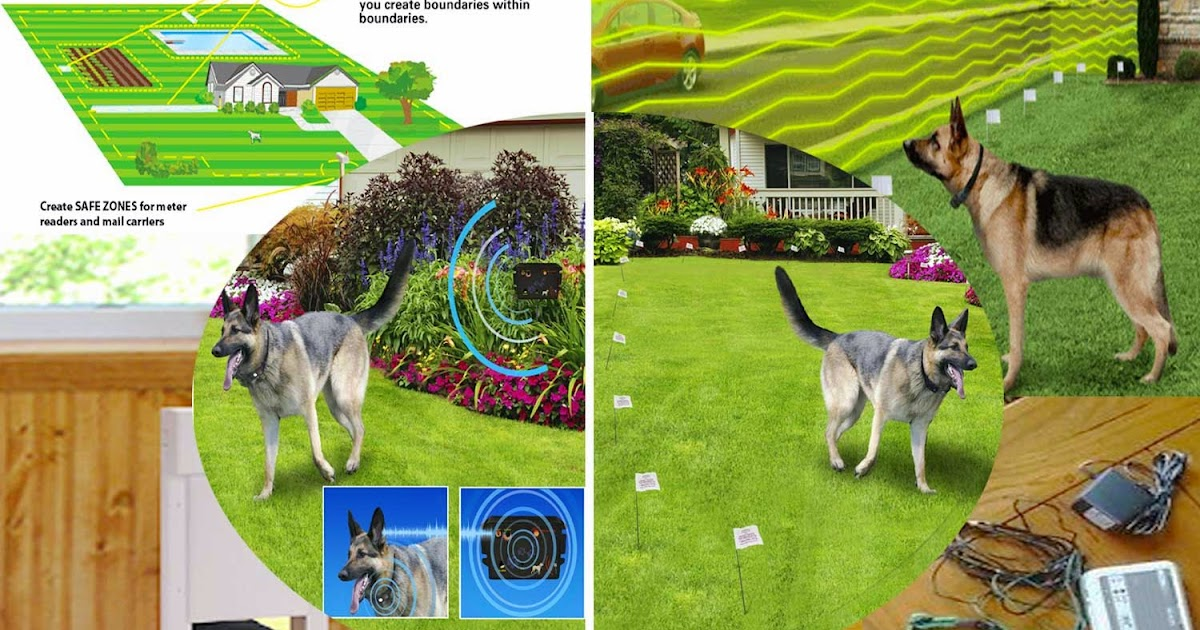 How much does invisible fence cost how much does invisible fence this site contains information about how much does a wireless invisible fence cost diy dog with how much does invisible fence cost solutioingenieria Image collections