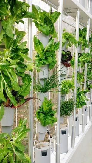 http://blog.planteaenverde.es/ideas-para-huertos-urbanos-en-espacios-pequenos/