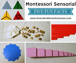 Sensorial:  Five Fun Facts