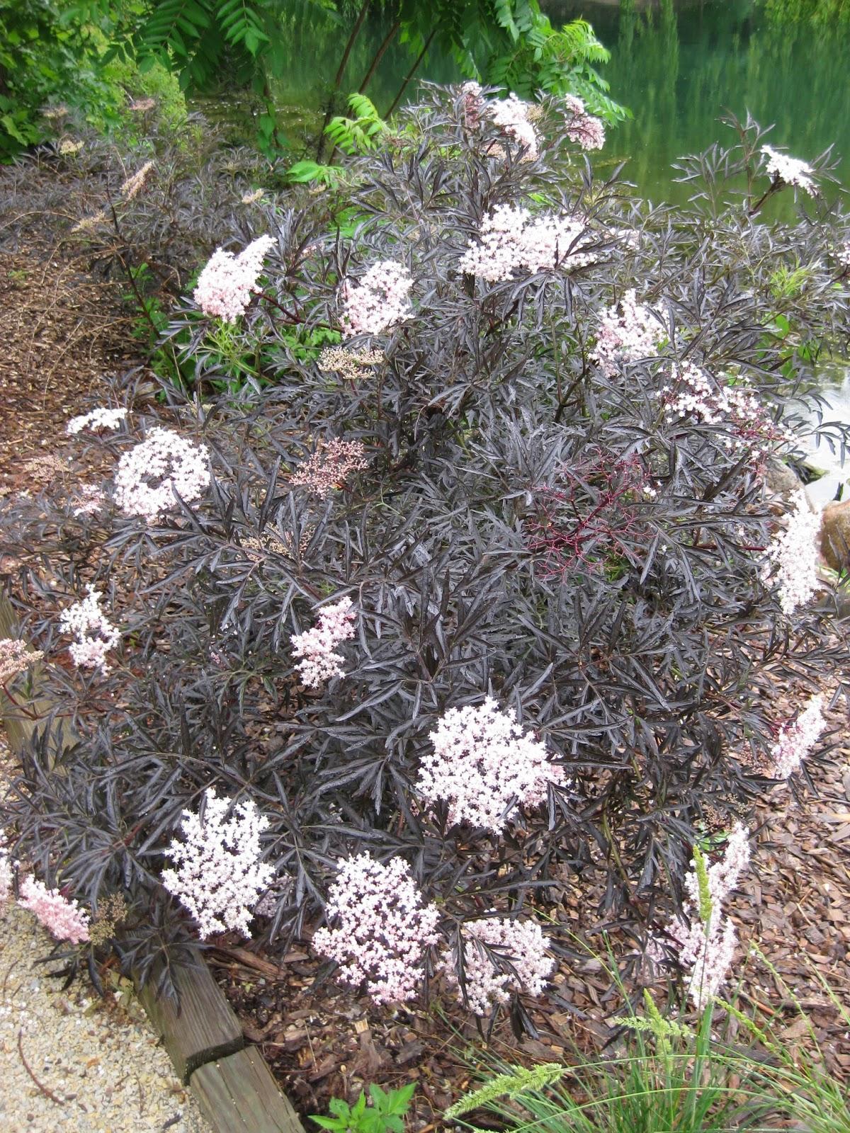 rotary botanical gardens hort blog volunteer power. Black Bedroom Furniture Sets. Home Design Ideas