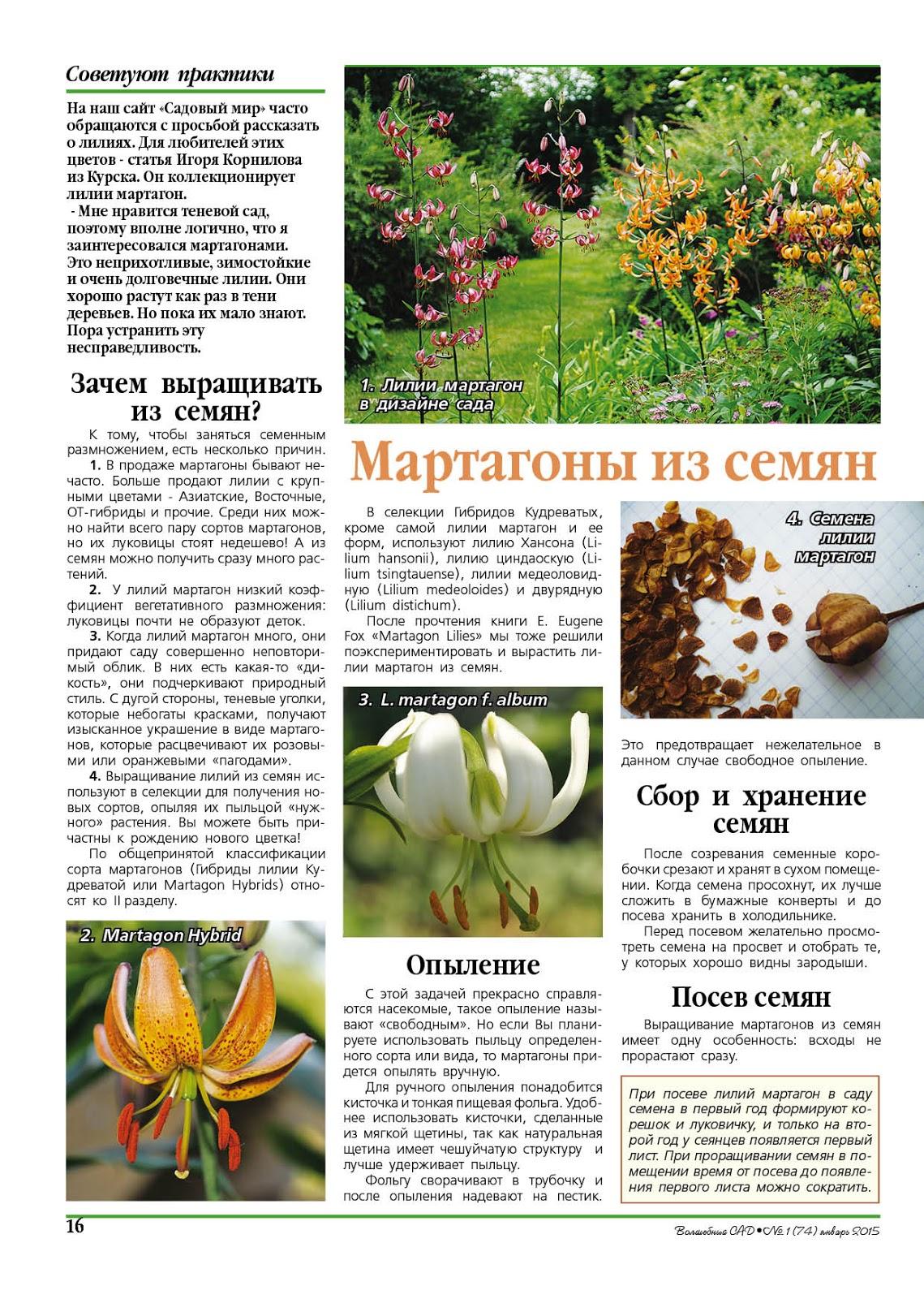 Волшебный сад ● №1 (74) ● Январь 2015 ● Мартагоны из семян