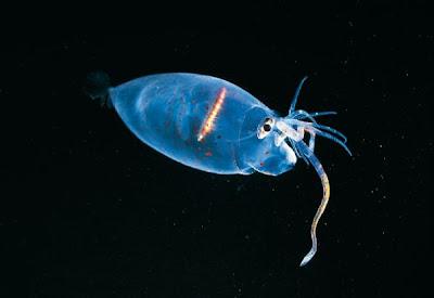 صور أسماك جديدة,موقع جزيرة خيال