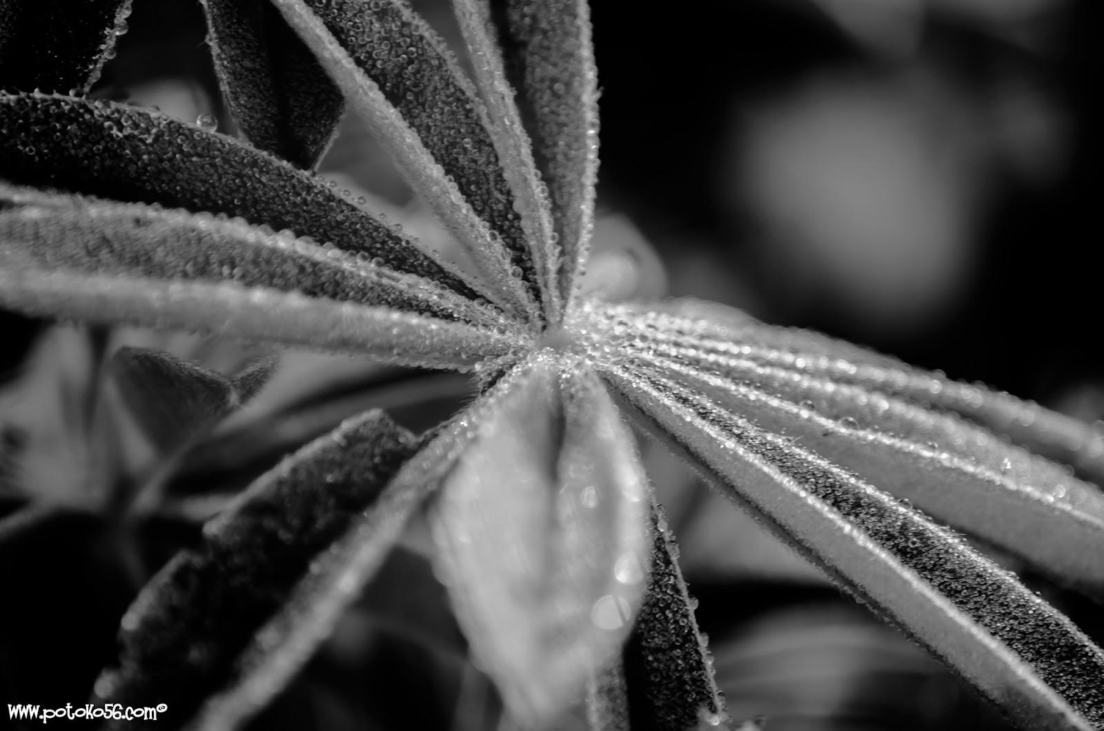 el rocío de la noche sobre unas hojas de hierba silvestre en Rota