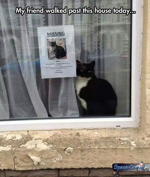 funny cat sign picture