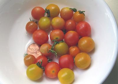 Annieinaustin, tiny tomatoes