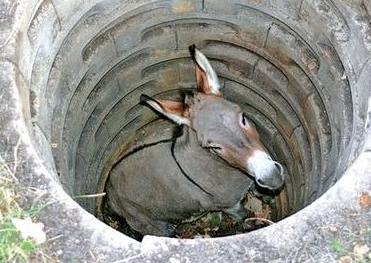 mule-in-well