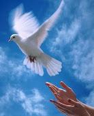 Eu amo o Espírito Santo!!!