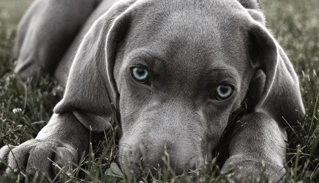 de que color miaran los perros???