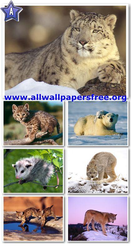 100 Amazing Animals Wallpapers 1600 X 1200 [Set 17]