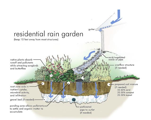 http://www.greeningthegrey.org/wp-content/uploads/2013/02/rain-garden.jpg