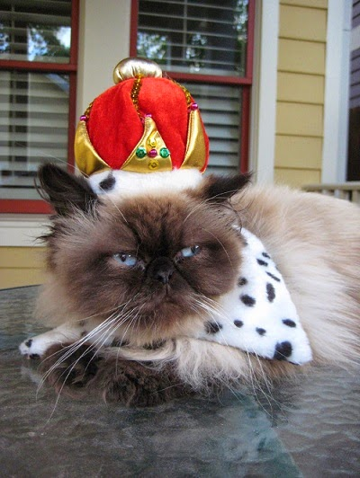 Halloween Cat Costumes - Crown Hat for Cats