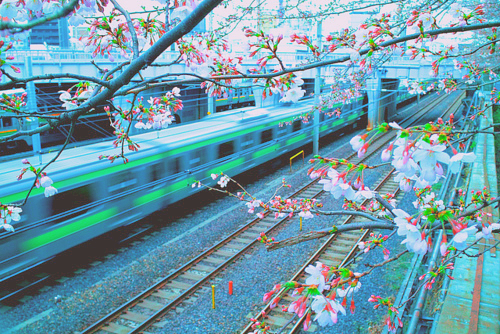Holly S Hill Train Station Sakura Japan