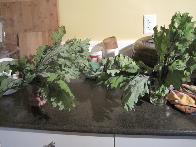 wilted kale being revived with structured vs regular tap water