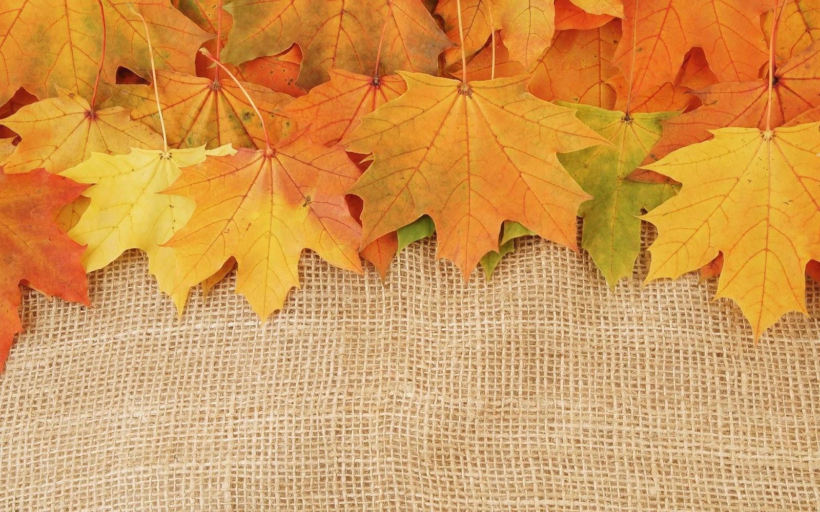 http://4.bp.blogspot.com/-DOIizdYkW2g/UIf_iOF04RI/AAAAAAAAH5A/vijN8b1LG_U/s1600/herfst-wallpaper-met-herfstbladeren.jpg