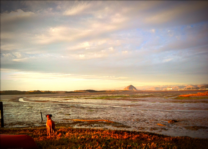 Dog looking across the bay. Notes from the Pack - The Story of Dog. Photo of Stella the Rhodesian Ridgeback by Ren Nickson Photography